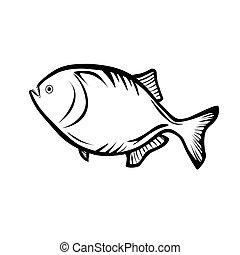 Piranha - Vector illustration : Piranha on a white...
