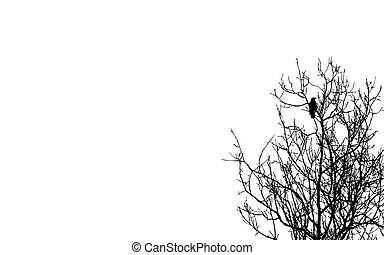 vector illustration ravens on branch on white background