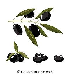 vector illustration set of black Olives with leafs