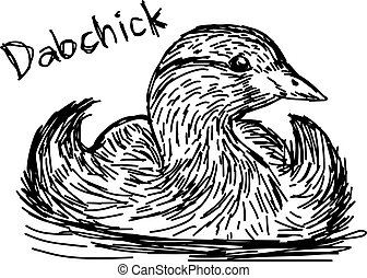 vector illustration sketch hand drawn with black lines of dabchick isolated on white background