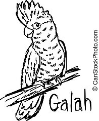 vector illustration sketch hand drawn with black lines of galah isolated on white background