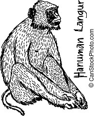 vector illustration sketch hand drawn with black lines of hanuman langur isolated on white background