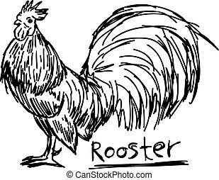 vector illustration sketch hand drawn with black lines of rooster isolated on white background