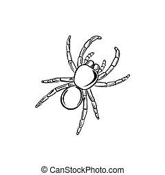 Tarantula - Vector illustration : Tarantula on a white ...