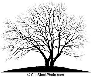 Vector illustration tree. Silhouette oak without leaves