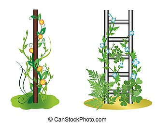 vector illustration - vertical plants with flowers