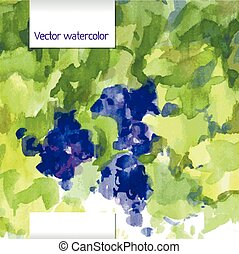 Vector illustration watercolor grap