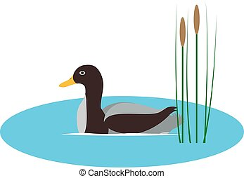 Vector illustration wild duck in pond with reeds
