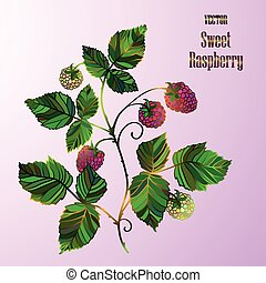 Vector illustration  with a raspberry