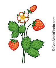 Vector illustration with a wild strawberry.