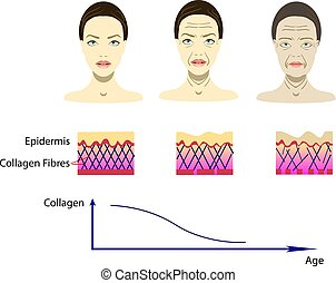 Vector illustration with aging process, scheme for cosmetological pictures