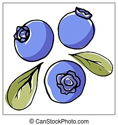 Vector illustration with blueberries on a white background.