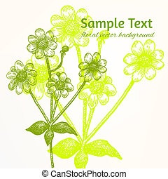 Vector illustration with hand drawn chamomile on white background