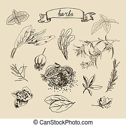 Vector illustration with hand drawn herbs
