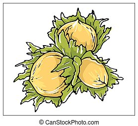 Vector illustration with Hazelnut on a white background.