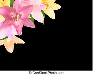 Vector Illustration with Lily Flowers Isolated on Black Background