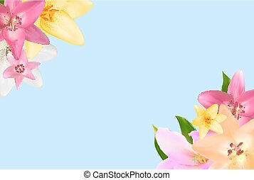 Vector Illustration with Lily Flowers Isolated on White  Background