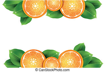 vector illustration with oranges on the white background