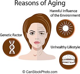 Vector illustration with reasons of aging, isolated