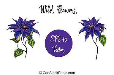Vector illustration with wild flowers collection isolated on white background.
