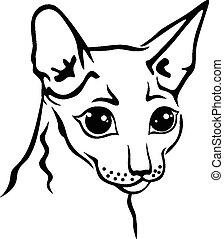 Cornish Rex cat muzzle