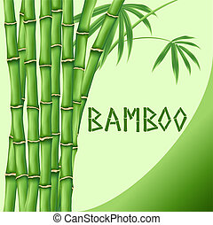 Bamboo on green background
