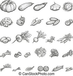 vector, ilustración, bosquejo, conjunto, de, vegetales