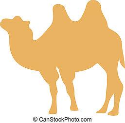 vector, ilustración, camello