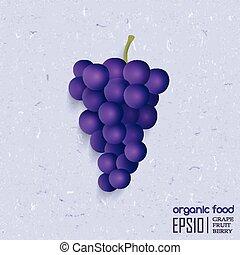 vector, ilustración, de, aislado, grape.
