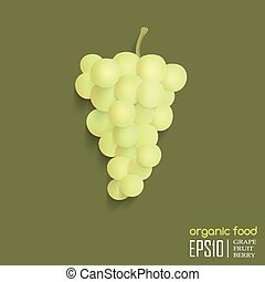 vector, ilustración, de, aislado, grape.