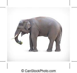 vector, ilustración, elefante