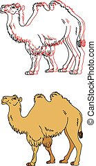 Vector image of a camel