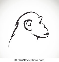 Vector image of a chimpanzee on white background