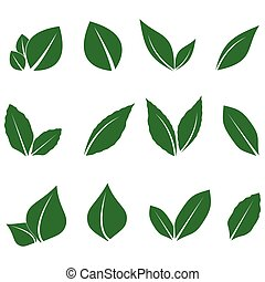 vector image of a green leaf