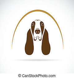 Vector image of an basset hound on white background