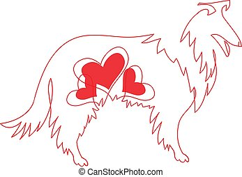 Vector image of an border collie dog on white background.
