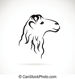 Vector image of an camel head on white background