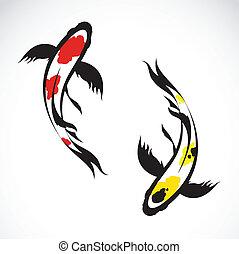 Vector image of an carp koi on white background