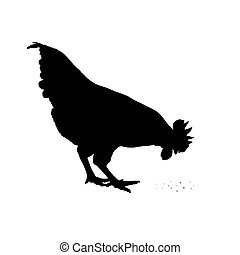 Vector image of an chicken on a white background.