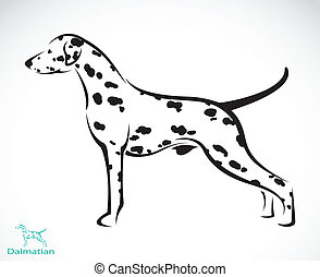 Vector image of an dalmatian dog on white background