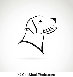 Vector image of an dog labrador on white background