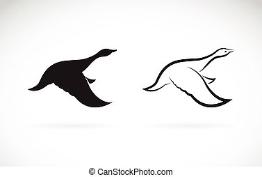 Vector image of an flying wild duck on white background