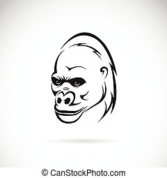 Vector image of an gorilla head on white background
