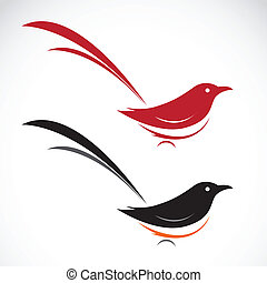 Vector image of an magpie on white background