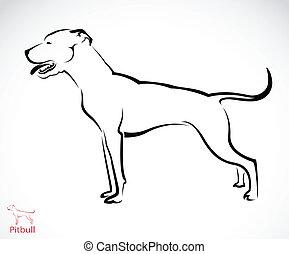Vector image of an pitbull dog