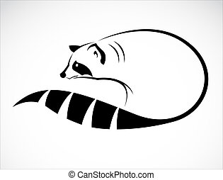 Vector image of an raccoon on white background