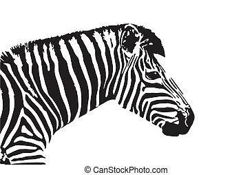 Vector image of an zebra head