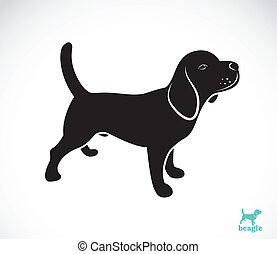 Vector image of beagle dog on white background