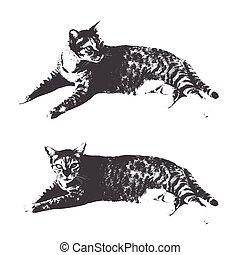 Vector image of cat on white background