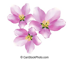 Vector image of cherry tree flowers - isolated